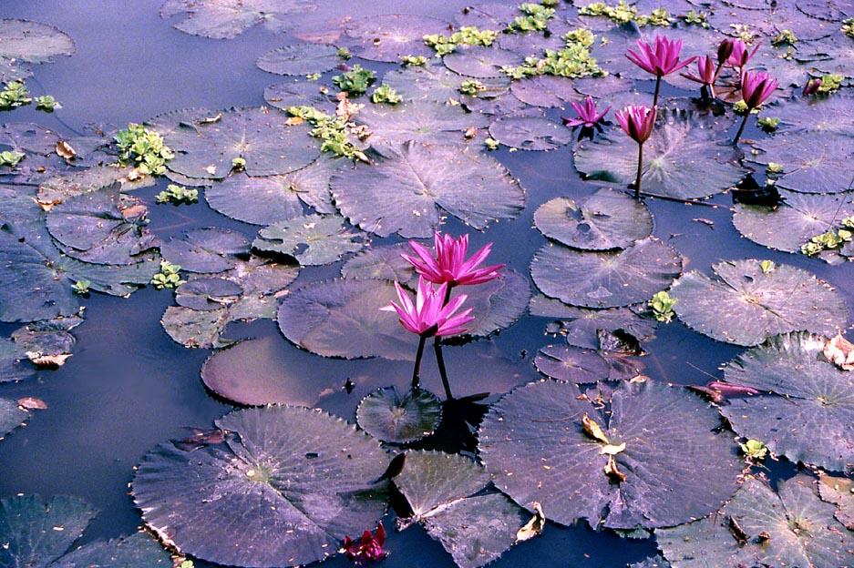 Lotus Bangkok
